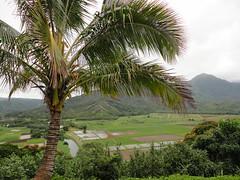 Hanalei Taro Fields (Stabbur's Master) Tags: hawaii hawaiianislands taro poi hanalei hanaleilookout hanaleivalley kauai palmtree
