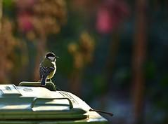 My little bird friend :) (Pics4life.nl) Tags: bird friend happy dof