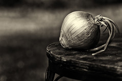 onion bokeh (loco's photos) Tags: light food monochrome outdoors italian dof pentax bokeh vegetable depthoffield vogue software nik onion kr da5514 photovogue silverefex2