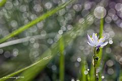 Flores CXXXIV (sairacaz) Tags: flowers white flores macro verde green blanco canon tamron 90mm tamron90mm eos550d