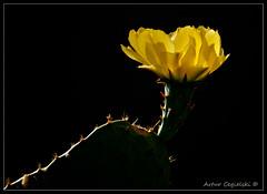 * * * (Artvet) Tags: usa may 2012 arizonacalifornia