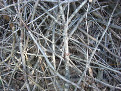 pile o' twigs (gaslight romantics) Tags: wood sticks pile twig stick twigs