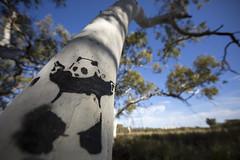 Panda (eightythreephoto) Tags: trees sky art canon stencil paint panda banksy australia wa spraypaint karratha pilbara 14mm 5dmkiii