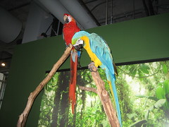 09 - Macaws (Scott Shetrone) Tags: birds animals aquarium events southcarolina 4th places charleston macaw anniversaries