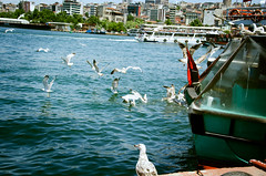 Seagulls (Q.Charlene) Tags: blue sea summer sunshine turkey golden dance nikon seagull istanbul mosque horn galata