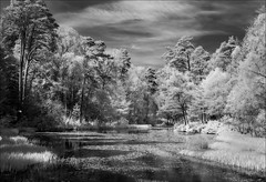 Loch Dunmore (Stan Farrow Photography) Tags: trees red ir scotland perthshire loch infra dunmore faskally pirlochry
