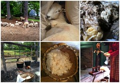(37) From Sheep to Yarn (Foxy Belle) Tags: new england history wool nature make animal barn sheep cut farm country colonial days clean yarn eat how barnyard olden shear 1830s