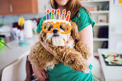 { happy birthday, dexter! } (lempel_ziv) Tags: birthday red dog puppy gold glasses mix candles shihtzu happybirthday bichon dexter puppeh dextermorgan