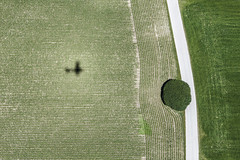 Self-Portrait (Aerial Photography) Tags: shadow tree field by landscape cornfield feld aerial lime agriculture ro schatten baum deu singletree