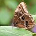 Stratford Butterfly Farm_3