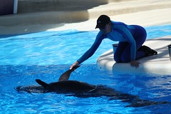 Pilot Whale Roll (Seals4Reals) Tags: blue sea rescue orlando florida whale seaworld pilot rescued horizons stranding