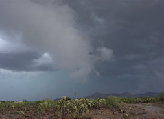 layers and layers (desert native) Tags: arizona cactus clouds tucson july monsoon rainstorm stormclouds milagro desertlandscape cholla desertstorm arizonadesert chainfruitcholla tucsonmountains 2013 july2013 julymonsoon milagrocohousing tusdland milagro2013