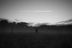 Vapour trail (martinfowlie) Tags: summer england sky blackandwhite mist man field clouds evening suffolk ride dusk thistle vapourtrail lmort