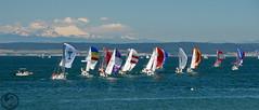 Race Week on Penn Cove (Blue Goose Inn by D.Broberg) Tags: race boat cove sound penn sail wa week puget coupeville bluegooseinn