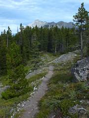 Wasootch Peak Ridge Walk and Scramble 8a - Wasootch trail (benlarhome) Tags: canada forest trekking trek kananaskis rockies path ridge trail alberta rockymountain scramble scrambling ridgewalk krummholz wasootchridge
