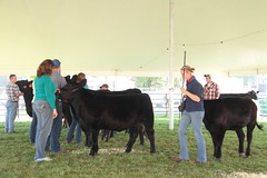 2485 (KathysPix) Tags: cattle angus beef armada fair 2013 thueme