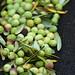 2013 Jordan Olive Harvest 002