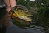 Brazil Peacock Bass Fishing 43
