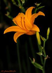 Flor (Juan M. S.) Tags: flores amarillo naranja