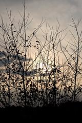 (Mateusz Mathi) Tags: autumn trees sky black fall canon eos leaf sigma poland 1770 czarny mateusz niebo mathi drzewa kalisz 600d