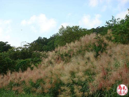 山水綠生態公園 (13).jpg