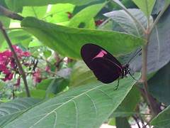 At The Butterfly Park (k009034) Tags: park travel plant nature beautiful mobile butterfly insect photography spain phone desire htc benalmadena flickrandroidapp:filter=none