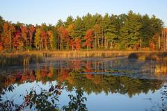 IMG_0943 (Dan Correia) Tags: amherst shadows swamp reflection vour 15fav topv111 topv333 topv555 510fav topv777 topv999 topv1111 1025fav