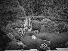 Detail of a Zen Garden at Meigetsu-in (Kamakura, Japan. Gustavo Thomas  2013) (Gustavo Thomas) Tags: blackandwhite bw naturaleza blancoynegro nature monochrome beauty japan japanese order kamakura religion jardin philosophy natura calm zen nippon meditation relaxation japon bnw nihon biancoenero zengarden giardino jardn japanesestyle japn meigetsuin giardinozen blancetnoir monocromtico meditacin relajacin zentemple jardinzen jardnzen meigetsutemple japanesetridition zanbuddhism