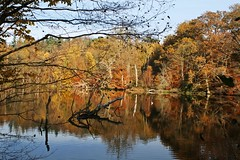 Lake Reflections (haberlea) Tags: autumn trees plants lake nature reflections virginiawater wter virginiawaterlake