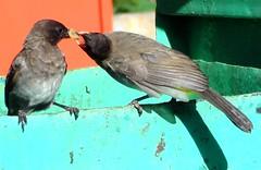 birds sharing (GATUHA) Tags: mare wiseacre jimbobedsel naturebestblogcom sheldon1506 keje2483