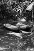 Can Tho Floating Market 26 (hughderr) Tags: tourism river boats boat flickr farm scenic delta canoe vietnam adventure jungle plantation mekong floatingmarket cantho natgeo phongdien onebag wanderrlust