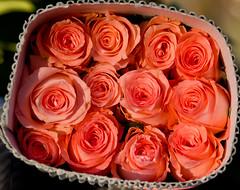 GudimalkapurFlowerMarket-0839 (Satish Chelluri) Tags: flowers market photowalk hyderabad sia flowersellers flowermaket gudimalkapur satishchelluri gudimalkapurflowermarket satishchelluriphotography