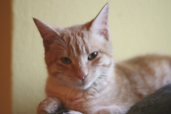 Tou (Slya Cabret) Tags: pet cats animal cat kitten kitty gatos gato cachorro purr felino meow ilovemycat gatitos gatto mascota miau gatinho gatito catlady ilovemypet ilovecats minino catlover caturday