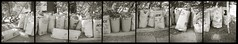 An effusion of green waste heptaptych (efo) Tags: bw multiframe incamera curbside anscomemo greenwaste heptaptych polyptytch