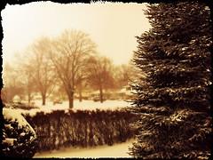 -22 Windy & Cold (Sue90ca) Tags: winter snow tree canon windy bushes edits 18200mm 60d waitingforthefloorstodry