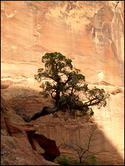 Utah (smacss) Tags: park red cliff tree green utah sandstone arches moab np twisted