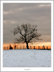 Winter tree at sunset (flatfoot471) Tags: winter plant rural landscape scotland stirlingshire drymen lochard