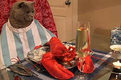 Misha's Valintine (Clashmaker) Tags: family love dinner cat fun joke gourmet misha lobster valentinesday redlobster saintvalentine