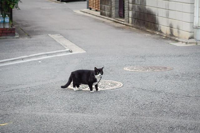Today's Cat@2014-02-19