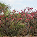 IMG_0491 Kenya, Samburu