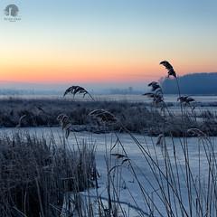 Cold (warmianaturalnie) Tags: winter lake cold ice water sunrise poland warmia