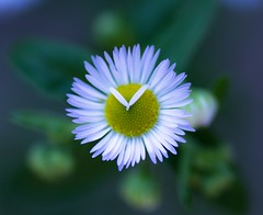 Simple but beauty (Tomislav C.) Tags: flowers summer flower macro beautiful beauty garden petals stem paint pistil stamen simple wonderfully