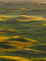 Golden Hour over the Palouse (kwphotos.com) Tags: palouse southeast southeastern wahington state steptoe butte rolling hills wheat fields farmland green golden light hour evening late shadows road fertile grain landscape kyle wasielewski kwphotos kwphotoscom