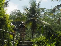 P9270036 (tonkonogov) Tags: indonesia bali ubud