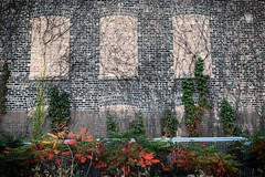 (294/366) Wall and Flora on the 606 (CarusoPhoto) Tags: 606 rail trail multiuse park recreation iphone 7 plus john caruso caruosphoto photo day project 365 366 chicago neighborhood street flora plants landscape landscaping wall