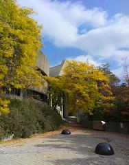 DSC07397 (sesquiotic) Tags: foliage fallfoliage ontariosciencecentre