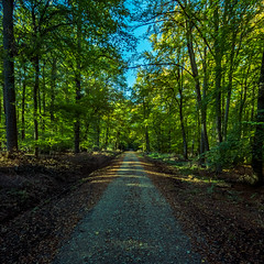 Road through the autumny forest (Tobias Schulte) Tags: autumn herbst wald forest bume trees bltter leaves green gravel schotter lightrays sunrays sonnenstrahlen walk spazieren laufen logs stmme blue sky blauer himmel laub