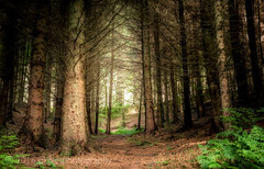 Forest Way (PKpics1) Tags: forest trees landscape woods bark leaves ferns hopcott minehead westsomerset exmoor outdoor