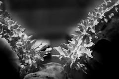 Deformed Deer Skull (shaire productions) Tags: skull bones image animal nature science scientific study photo photograph skeleton skeletal creature halloween creepy scary picture blackandwhite macabre dark horror biology taxidermy deformed anomoly weird tumor deformity deer antler