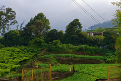 Ooty Countryside (code_martial) Tags: d3300 1685mmf3556gvr ooty2016 ootacamund udhagamandalam roadtrip
